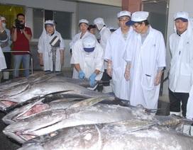 7 con cá ngừ đại dương bán giá rẻ tại chợ đấu giá Nhật Bản