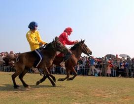 Lên Gò Thì Thùng xem nông dân đua ngựa