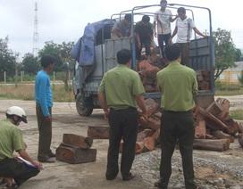 Lâm tặc tấn công kiểm lâm để tẩu tán gỗ lậu