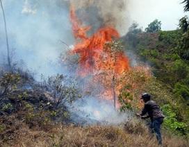 Nắng nóng kéo dài, nhiều khu rừng trong tình trạng báo động cấp độ nguy hiểm