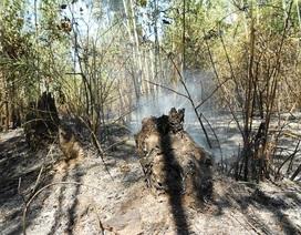 Nắng nóng kéo dài, rừng bạch đàn bốc cháy