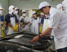 Khai thác cá ngừ đại dương theo chuỗi kém hiệu quả