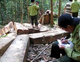 Mở đợt truy quét phá rừng, khai thác lâm sản trái phép
