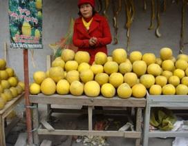 Cam Canh, bưởi Diễn: Chợ ê hề, vào vườn không mua được