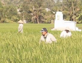 Vụ người Trung Quốc thuê đất trồng lúa: Nhiều bất thường