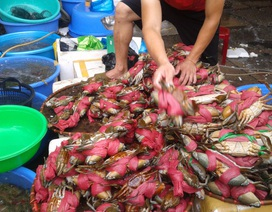 Đi chợ cá Hòn Gai