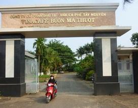 Vụ Vinacafe Buôn Ma Thuột bị kiện: Toà và viện KSND quan điểm ngược nhau