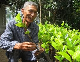 Hàng nghìn nhà vườn ở ĐBSCL đổ xô mua cây giống đặc sản
