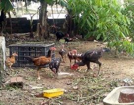 Đặt mua cả đàn gà, vườn rau đưa về phố