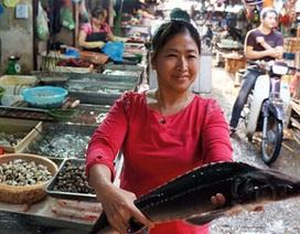 Phát hiện mẫu cá tầm nhiễm chất cấm