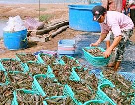 Trung Quốc tận thu tôm nguyên liệu, doanh nghiệp Việt lao đao