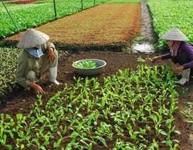 Tủi phận nông dân