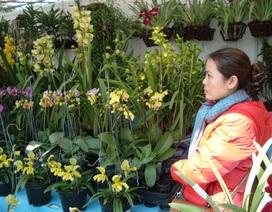 Địa lan nở sớm ở Đà Lạt: Hoa cười, người khóc