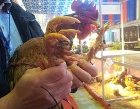 Hét giá gà độc, chim lạ tiền triệu vẫn đắt khách