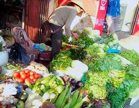 Chính vụ, giá rau xanh giảm mạnh