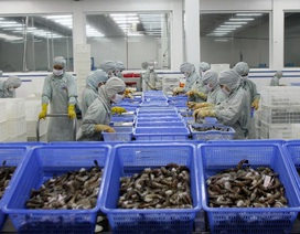 DOC dự kiến nâng thuế nhập khẩu đối với tôm Việt Nam