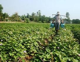 Giải mã mánh khóe mua nông sản lạ của thương lái Trung Quốc