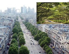 Không gian đô thị xanh – nhìn từ các nước