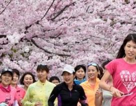 """Trung Quốc tranh giành """"hoa anh đào"""" với Nhật Bản"""