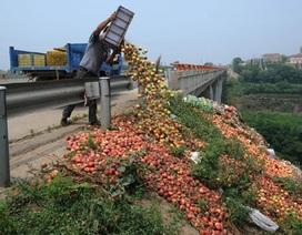 [Photo] Nông dân Trung Quốc đổ đào chín xuống đường vì ế