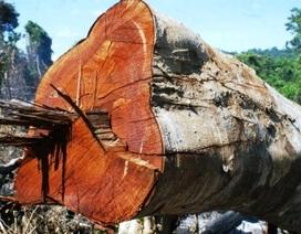 Rừng bị tàn phá gần trạm kiểm lâm
