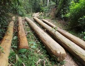 Rừng bị tàn phá: Ai cũng biết, chỉ bảo vệ rừng không biết?