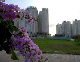 Chùm ảnh: Bằng lăng tím rực nở trên phố Sài Gòn