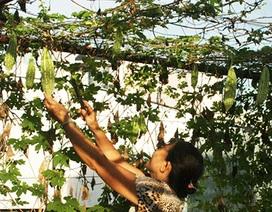 """Sợ rau """"bẩn"""" người dân tự trồng rau trên sân thượng"""