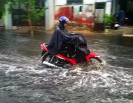 """TP HCM: Mưa lớn gây ngập, lốc xoáy """"hạ gục"""" cây xanh, mái tôn"""