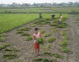 Những đứa trẻ nghèo trong ngày Tết thiếu nhi