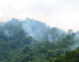 Bình Định: Cháy rừng phòng hộ trên  núi Bà Hỏa