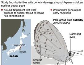 Nhật phát hiện bướm biến dị sau thảm hoạ hạt nhân