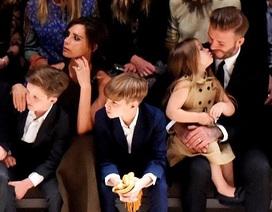 Công chúa của Beckham mê bóng đá như bố