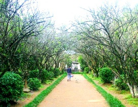 40 nhà vườn Huế đặc trưng được hỗ trợ chính sách bảo vệ
