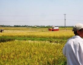 """Bị """"ép"""" thuê máy gặt giá cao, nông dân không gặt được lúa"""