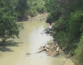 Vụ cả làng vây bắt lâm tặc: Chỉ 40 cây bị chặt hạ (?!)