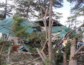 Gió lốc quật đổ hàng loạt cây thông