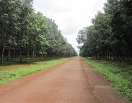 Nhận không hơn 50.000 ha đất rừng nghèo, doanh nghiệp vẫn nợ ngân sách