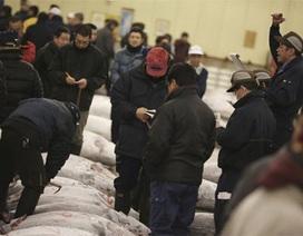 Khám phá phiên đấu giá cá ngừ đầu năm ở Tokyo