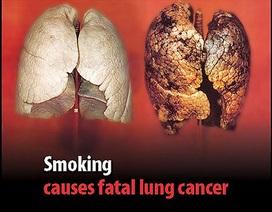 WHO kêu gọi ngăn chặn sự can thiệp của ngành công nghiệp thuốc lá