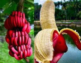 """Những cây độc, quả lạ khiến người dùng Việt """"phát sốt"""""""