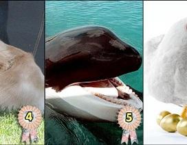 Những động vật thừa kế giàu có nhất