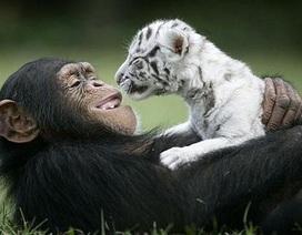 """Chùm ảnh: Xem động vật """"khác dòng"""" kết bạn"""