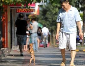 Chú chó thích đi dạo bằng 2 chân