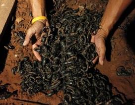 Sống chung nhà với 4.600 con bọ cạp