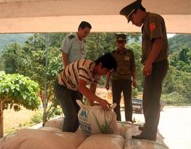 Bắt vụ vận chuyển gần 5kg cần sa về Việt Nam