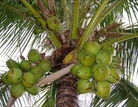 Ấn Độ chặt dừa để bảo vệ Tổng thống Mỹ