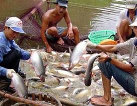 """WWF nhận sai, cá tra Việt Nam ra khỏi """"danh sách đỏ"""""""