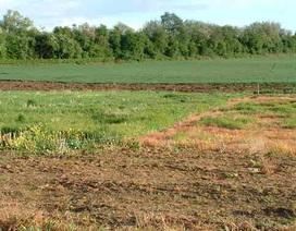 Báo cáo Chính phủ kết quả kiểm kê đất đai trong tháng 8 tới