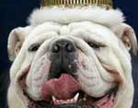Chàng… chó đẹp nhất hành tinh
